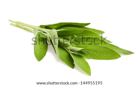sage leaves isolated on white - stock photo