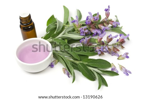 Sage plant and essential oil isolated on white - stock photo