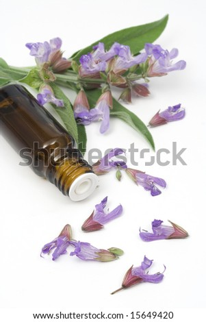 Sage plant and essential oil used for seasoning food, aromatherapy, cosmetics etc. - stock photo