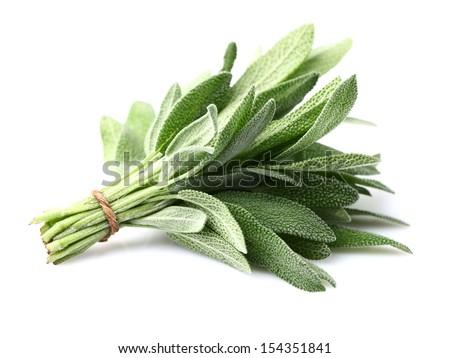 Sage plant on a white background - stock photo