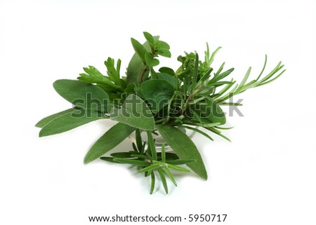 Sage, rosemary, parsley and oregano - aromatic herbs