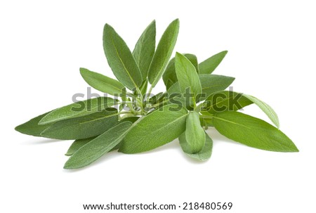 Sage sprig isolated on white background - stock photo