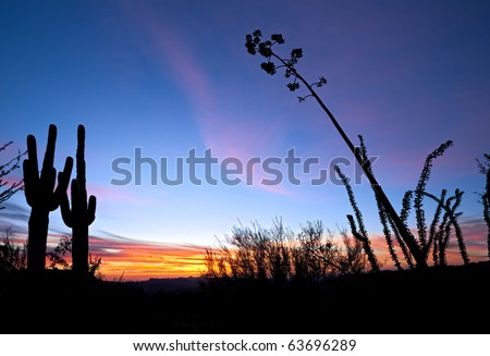 Saguaro and Agave silhouette in red blue sky of Apache Trail. - stock photo
