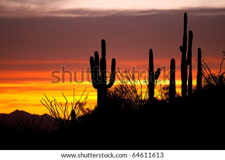 Saguaro and Ocotillo silhouetten at sunset on Apache Trail. - stock photo