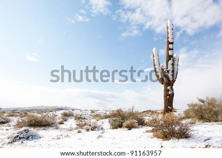 Saguaro Cactus and Fresh Desert Snow - stock photo