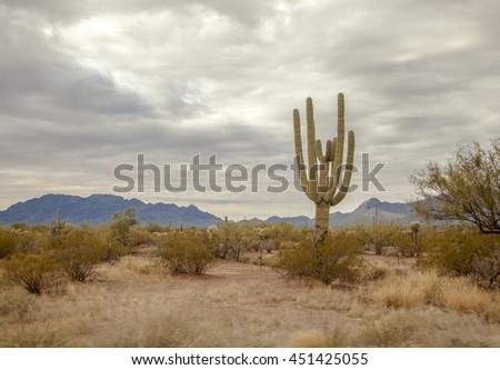 Saguaro cactus and the mountains in the Sonoran desert of Arizona