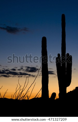 Saguaro cactus, in silhouette, Saguaro National Park, Arizona.