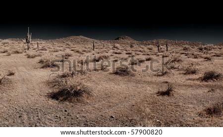 Saguaro cactus in the winter Arizona desert panorama - stock photo