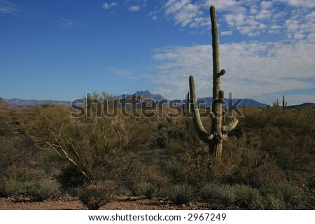 Saguaro Cactus on desert with mountain background and blue skies - stock photo