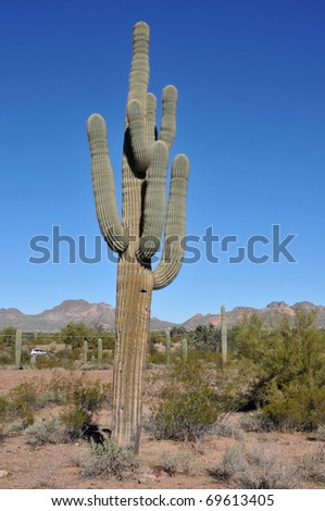 Saguaro cactus on the side of an Arizona highway - stock photo
