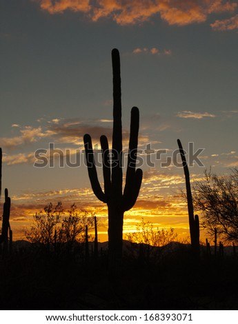 Saguaro Cactus Silhouette with vivid sunset in Tucson, Arizona