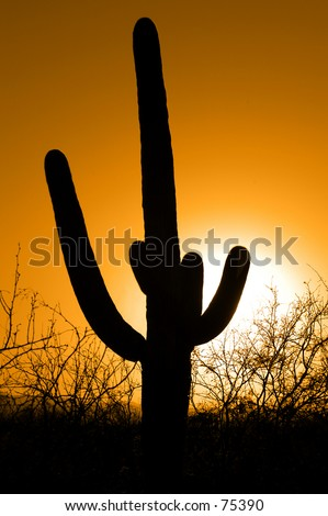 Saguaro cactus standing tall against sunset sky - stock photo
