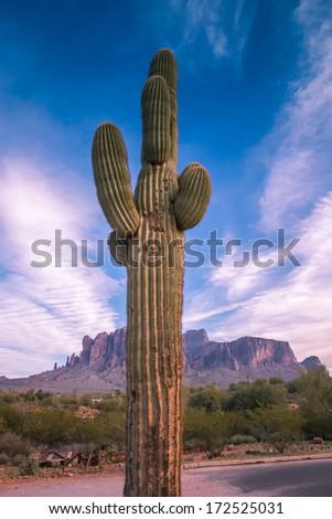 saguaro cactus sunset - stock photo