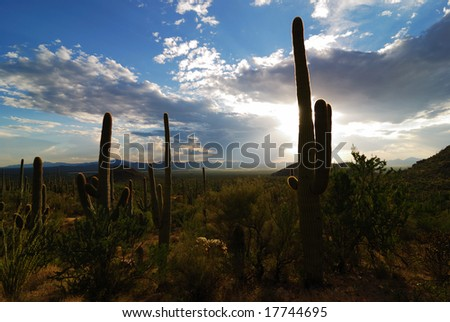 Saguaro Plant in Tucson, Arizona