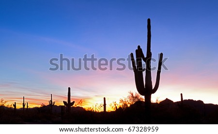 Saguaro silhouette at sunset, in red blue sky. - stock photo