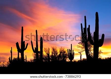 Saguaro silhouette in fiery Sonoran Desert sunset lit sky. - stock photo