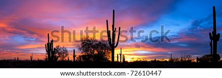 Saguaro silhouette in Sonoran Desert sunset lit sky. - stock photo