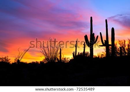 Saguaro silhouetten in fiery Sonoran Desert sunset lit sky. - stock photo