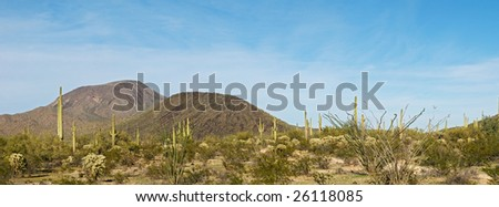 Saguaros and Table Top Mountain in Sonoran Desert. - stock photo