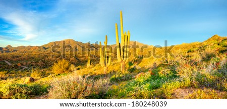Saguaros catching days first sunrays. - stock photo