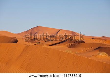 Sahara desert - stock photo
