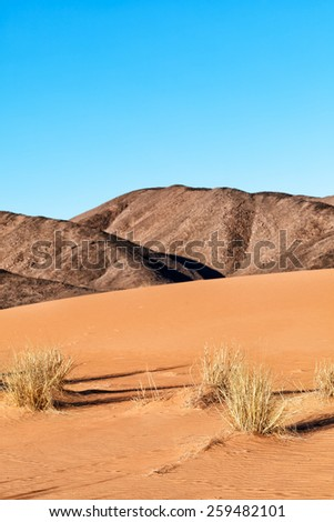 Sahara desert landscape. Sand dunes, background hills and clear blue sky. Focus is on the foreground desert grass. - stock photo
