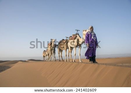 SAHARA DESERT, MOROCCO, MARCH 6, 2014.  A berber standing on a sand dune with his caravan of camels in the spring in the Sahara Desert in Morocco, on March 6th, 2014. - stock photo