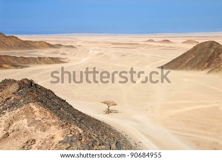 Sahara dry desert with lonely tree by Hurghada, Egypt - stock photo
