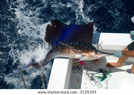Sail Fish out of the water
