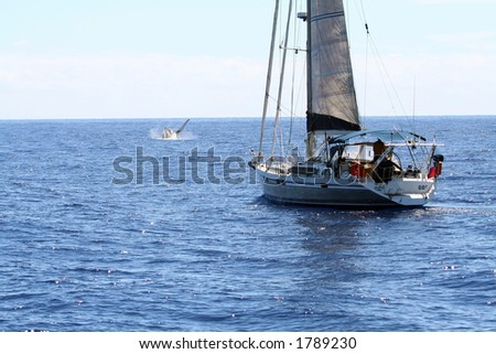Sailboat watching whales on the ocean