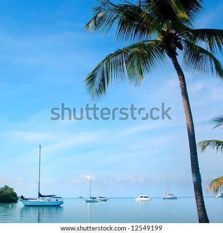 sailboats and palm tree - stock photo