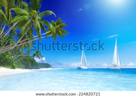 Sailboats on beach and palm tree. - stock photo