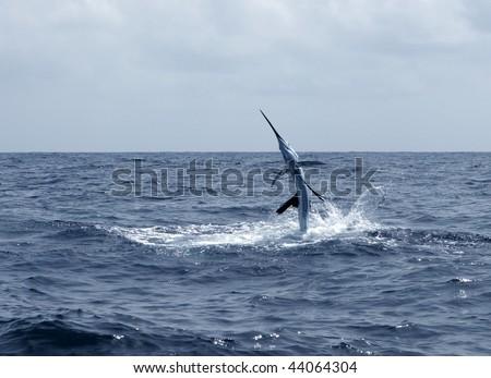 Sailfish saltwater sport fishing jumping - stock photo