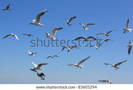 sailing flight - stock photo