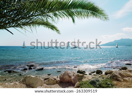Sailing ship yachts with white sails and palm leaves - stock photo