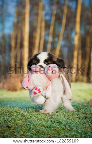 Saint bernard puppy playing with soft toy bunny - stock photo