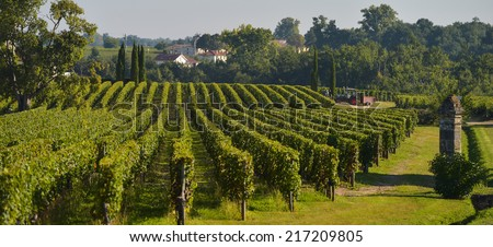 Saint-Emilion-Vineyard landscape-Vineyard south west of France-Pomerol - stock photo