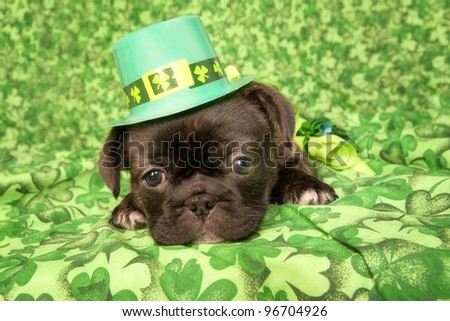 Saint Patrick day puppy on green - stock photo