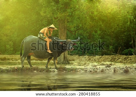 Sakon Nakhon, THAILAND - MAY 16 : Unidentified Thailand child riding water buffalo on cornfield May 16, 2015 in Sakon Nakhon, Thailand. - stock photo