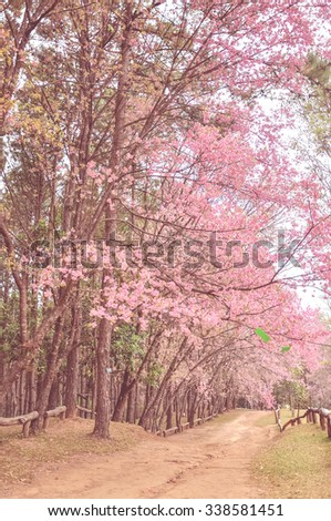 sakura flower with old color style, Thailand