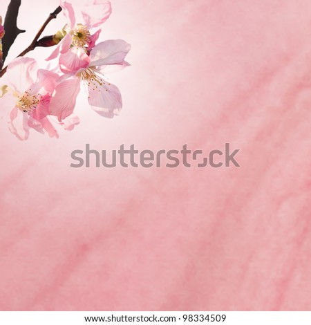 sakura for background or texture use - stock photo