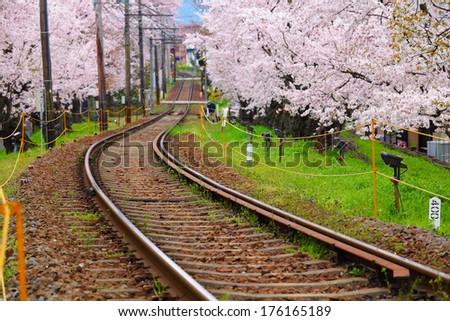 Sakura tree and train track - stock photo