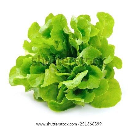 Salad isolated on white background .Salad leafs  - stock photo