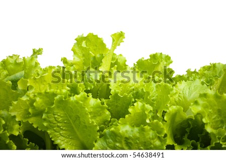 Salad leaves on a white background - stock photo