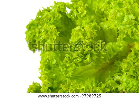 Salad leaves on a white background