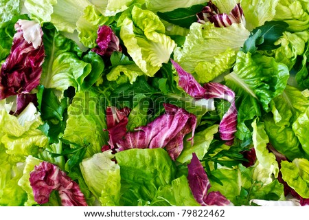 Salad Leaves With Lettuce Radicchio And Rocket As A Background
