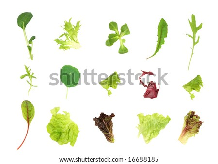 Salad lettuce and herb leaf selection, over white background. - stock photo
