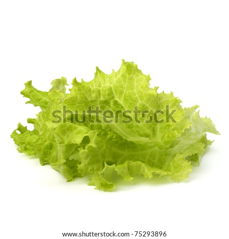 Salad lettuce isolated on white background - stock photo