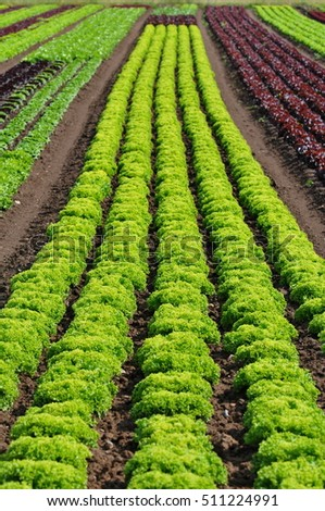 salad lines on a field
