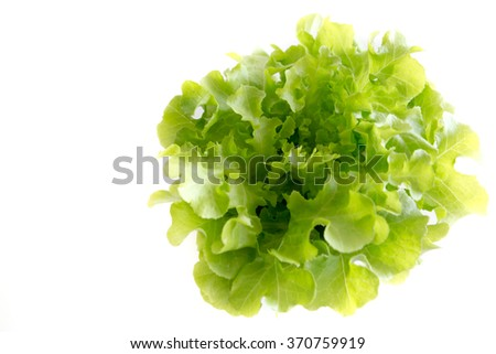 salad vegetable with isolated background